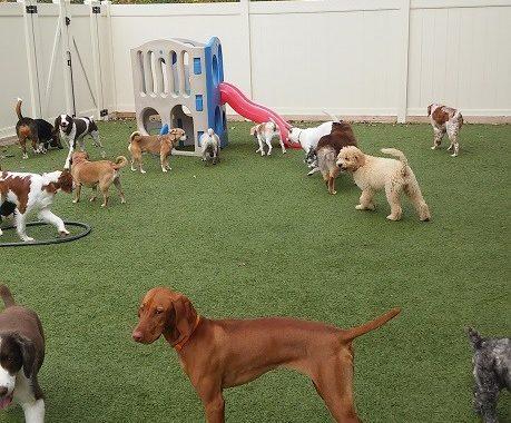 best doggy daycare birmingham mi