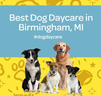 best dog daycare birmingham michigan