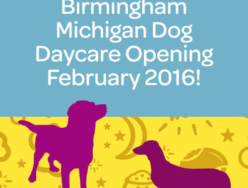 birmingham michigan dog daycare opening february 2016