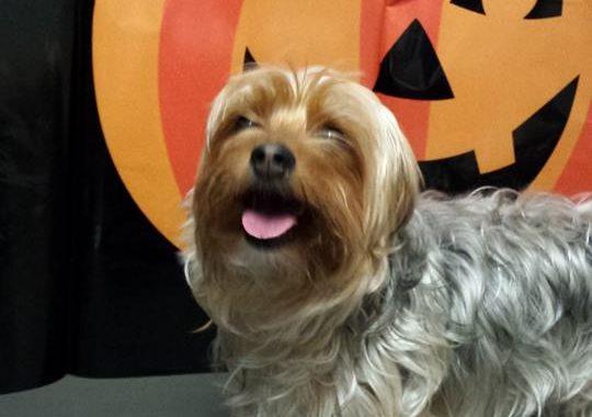 dog boarding at halloween in birmingham mi