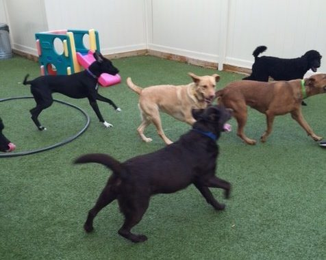 Dog Parks In Michigan Or Dogtopia Indoor Dog Parks Birmingham
