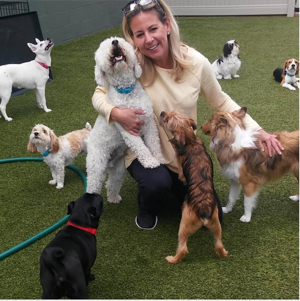 Do You Know How to Pick the BEST Dog Day Care Near You