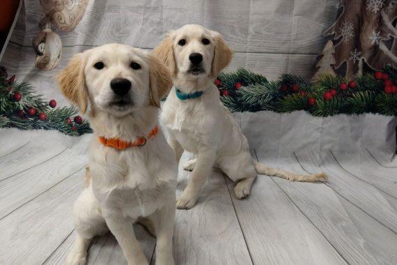 christmas puppy daycare birmingham mi