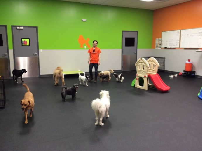 Dogtopia Playroom