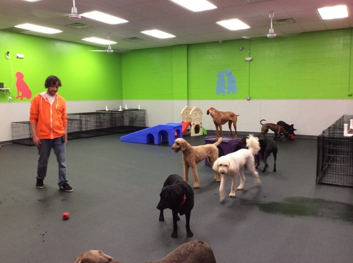 Fun Times at Dogtopia