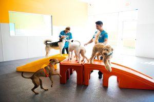 Dogs playing king of the hill at dog daycare in Houston, TX