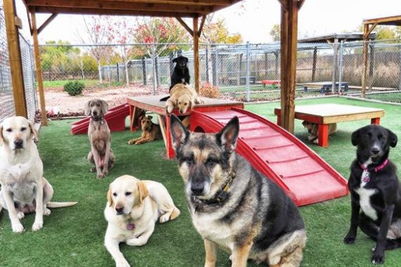 what dog boarding houstonians need to know
