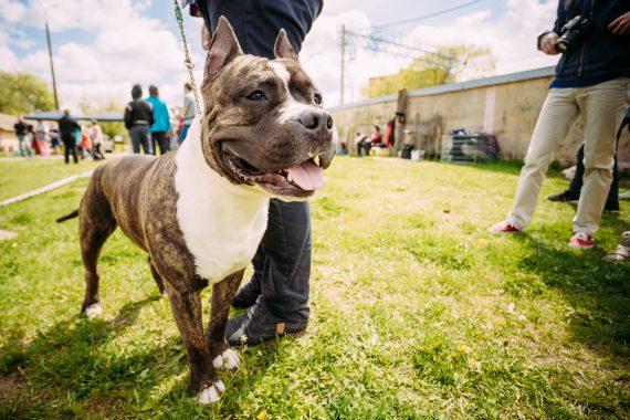 houston dog boarding coronavirus