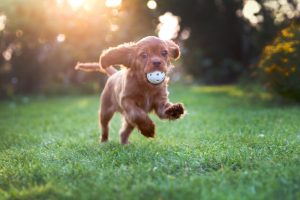 puppy daycare and the benefits it has at Dogtopia Galleria