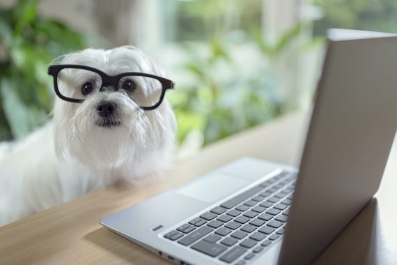 Dog watching dog on cameras at dogtopia