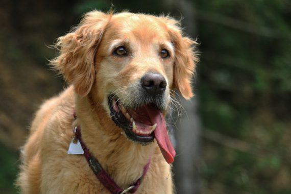 Global-Pet-Foods-Dog-Park-on-Bayview-Parkway