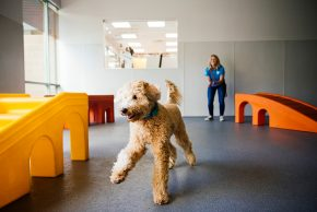 Dog Daycare, Boarding, Spa | Dogtopia Bloor West