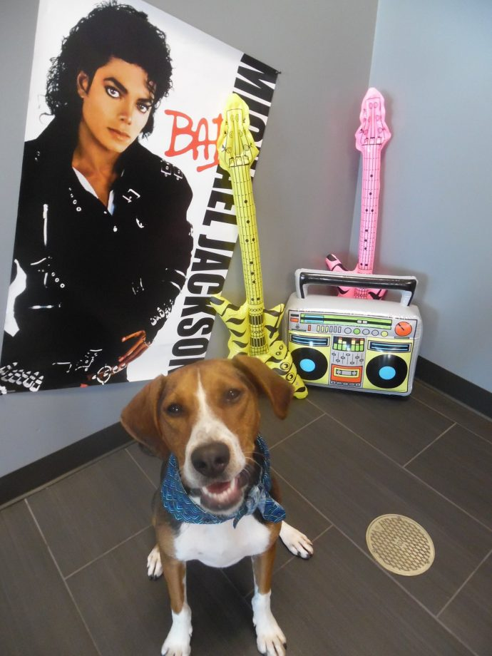 Time Warp Tuesdays. Holly the Beagle/Hound mix posing in our 80's Photo Both Set Up