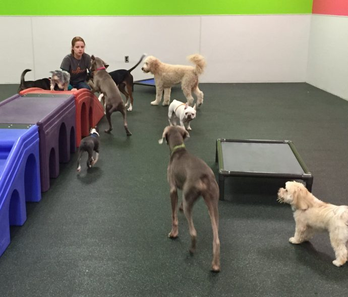 Playroom Attendant Erin with Winston and Ellie the Weimaraners, Ally the Goldendoodle, Toby the French Bulldog, Bentley the Morkie, Rudy the Boston Terrier, Kensey the Yorkie Poo, Holly the Beagle/Hound mix, Gemma the Sharpei mix and Buddy the Basset Hound