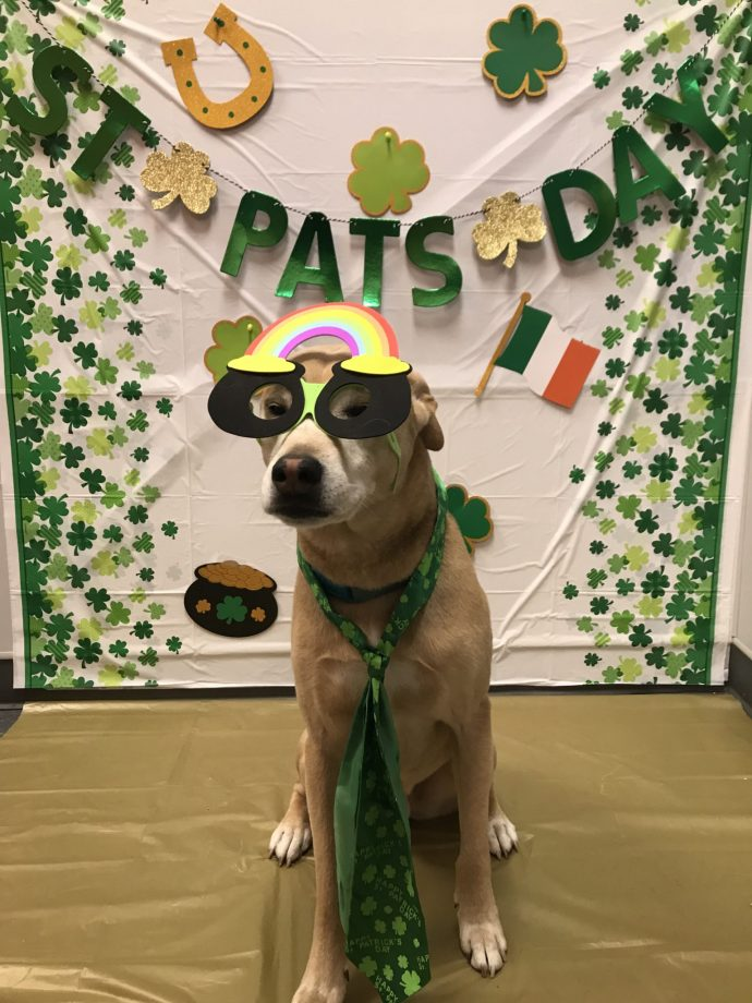 St Patrick's Day Party. March 2018. Mr Fitz. Shepherd mix