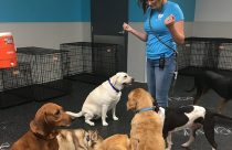 Dogs sitting and listening to their trainer