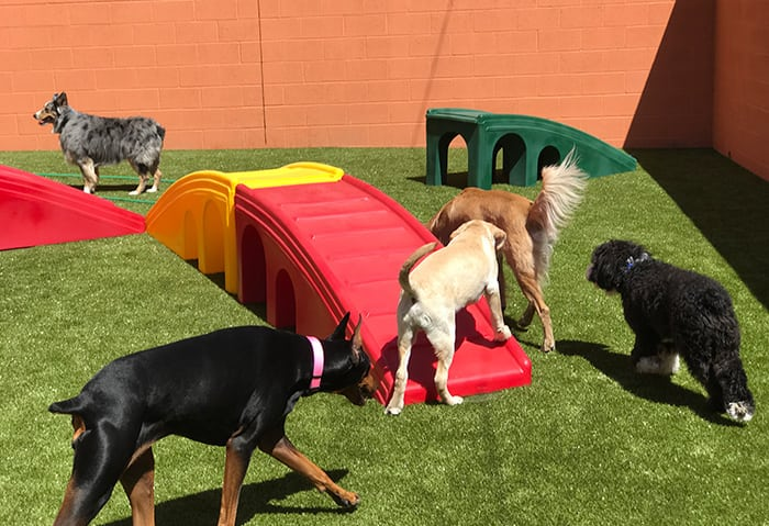 Dogs playing outside in a play area