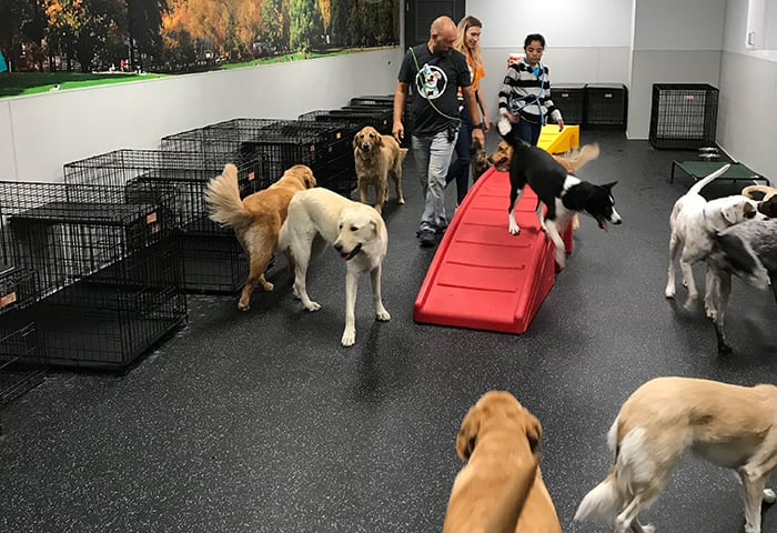 Many dogs playing with their trainers at Dogtopia