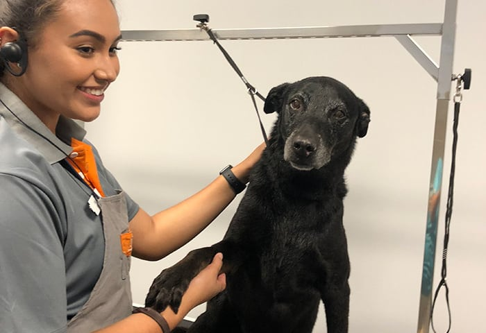 Shelter pup Kisses was recently treated to a spa day at Dogtopia of Arcadia!