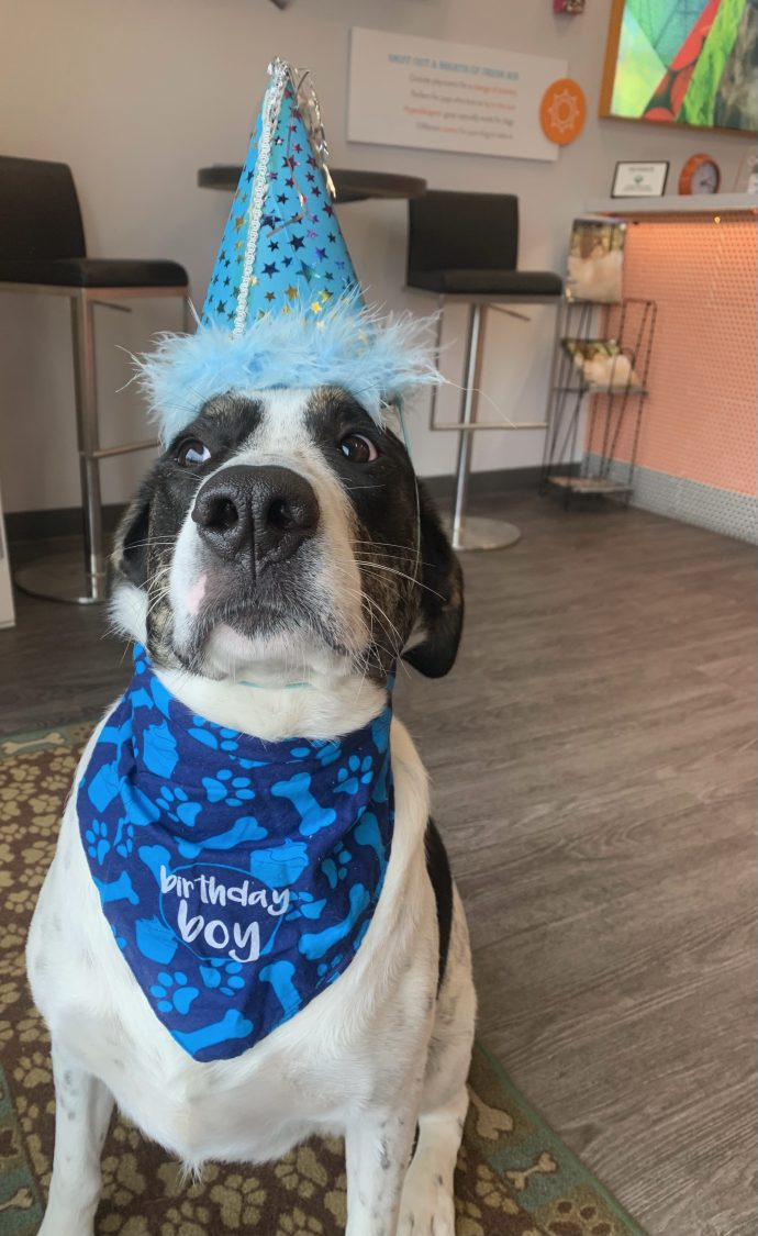 Dog wearing a blue party hat and a blue bandana