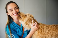Golden Doodle Kissing Canine Coach