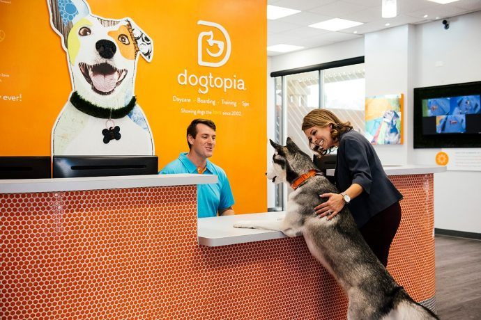 Husky at Dogtopia Reception Desk