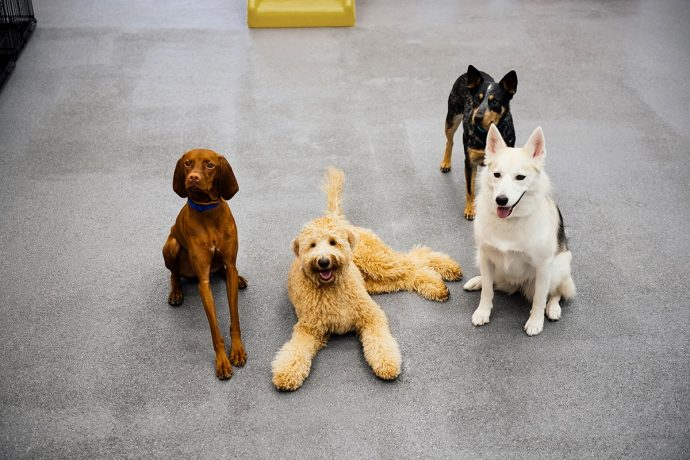 Four dogs posing to the camera