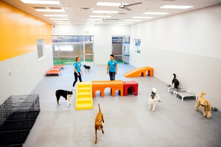 Overview of the Dogtopia of Grand Rapids daycare playroom with all the dogs running around.