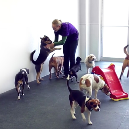 Dog Daycare Play