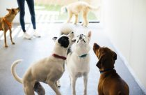 Three dogs trying to catch soap bubbles at Dogtopia of Fort Mill playroom.