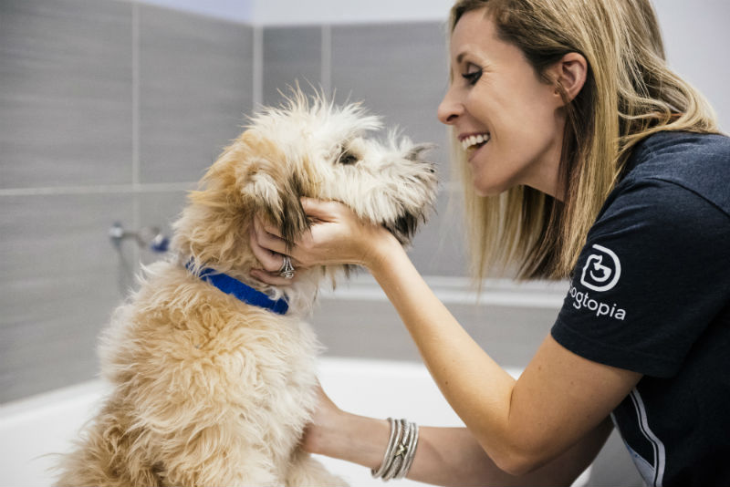 Groomer petting the Goldendoodle at Dogtopia of South Austin Spa.