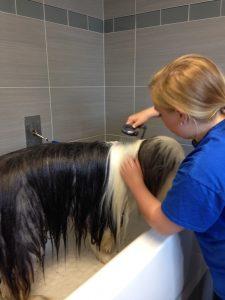 Staff member Megan Whalen bathing Gareth (English sheepdog)