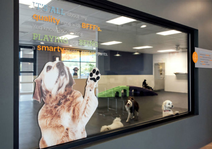 'View through the glass into the dogs'' playroom at Dogtopia of Stamford-Downtown.'