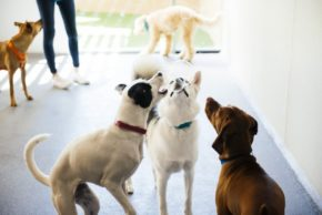 Three dogs trying to catch soap bubbles at Dogtopia of Alpharetta at Halcyon playroom.