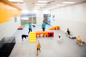 Overview of the Dogtopia of New Location daycare playroom with all the dogs running around.