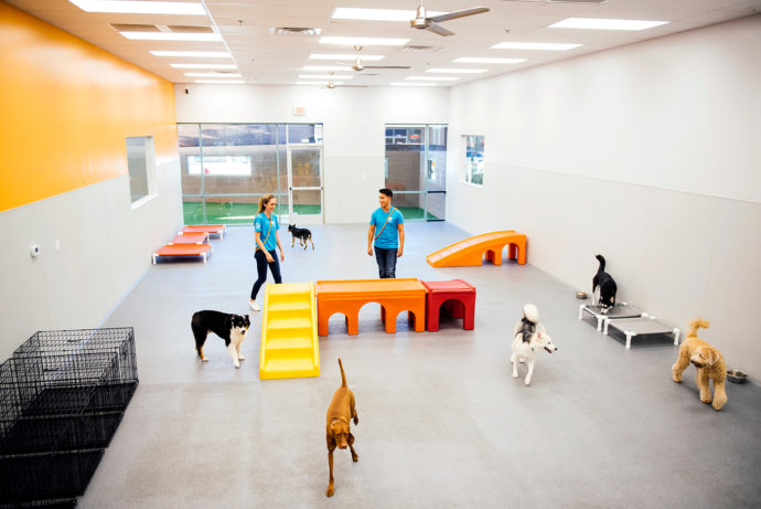 Overview of the Dogtopia of  Don Valley daycare playroom with all the dogs running around.