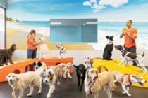 Dogtopia workers and dogs in the playroom