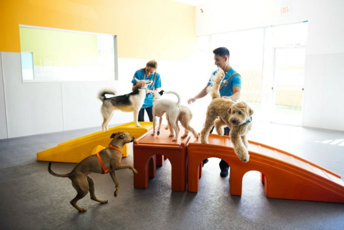 Certified coaches playing with five dogs at Dogtopia of [location] daycare.