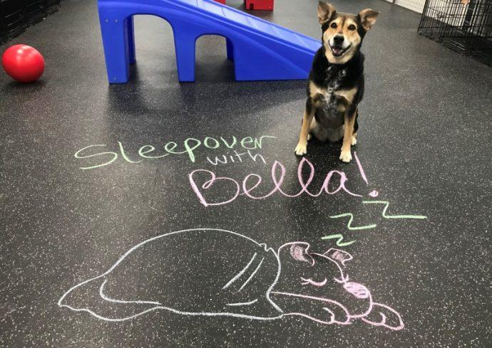 Bella Bear's sleepover