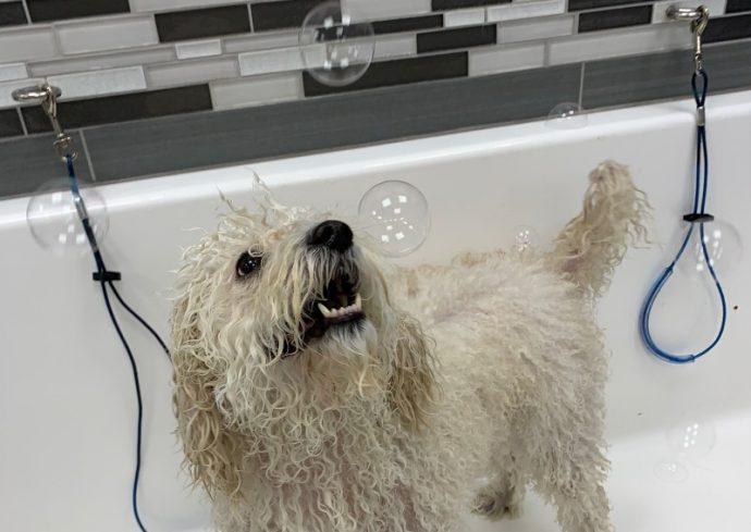 Layla enjoys her bath