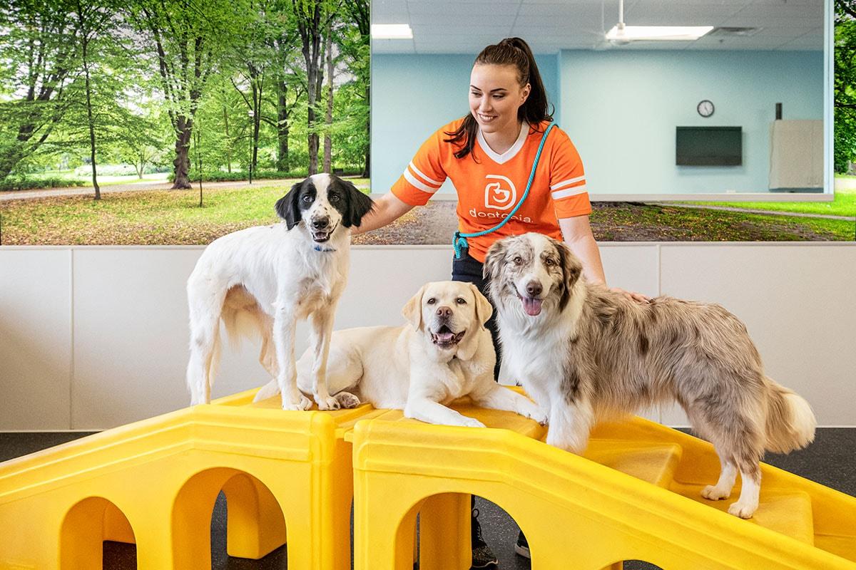 https://s3-prod.dogtopia.com/wp-content/uploads/sites/226/2020/11/DogtopiaGilbert_canine_coach_3b.jpg