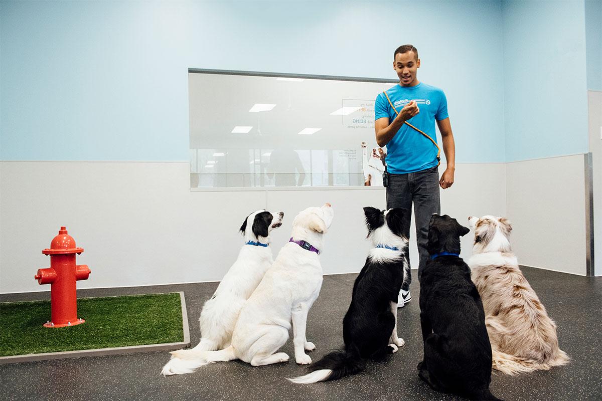 https://s3-prod.dogtopia.com/wp-content/uploads/sites/226/2020/11/DogtopiaGilbert_canine_coach_6.jpg