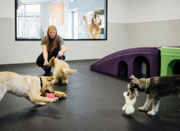 Dogs playing with toys at Dogtopia of Geneva daycare playroom.