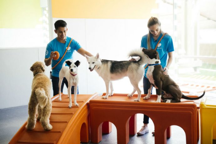 Dog behavior experts train four dogs at Dogtopia of Geneva daycare.