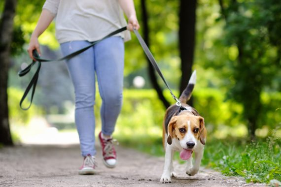dog healthy weight exercise