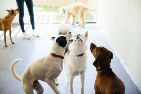 Three dogs trying to catch soap bubbles at Dogtopia of McKinney playroom.