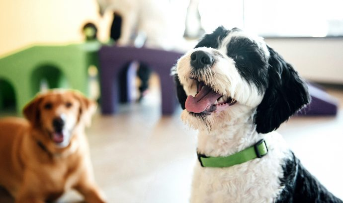 Happy Dog At Dogtopia Daycare
