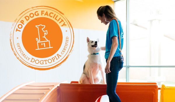 Top Dog Dogtopia Certification