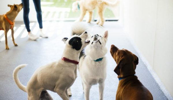 Three dogs trying to catch soap bubbles at Dogtopia of Harbor Steps playroom.