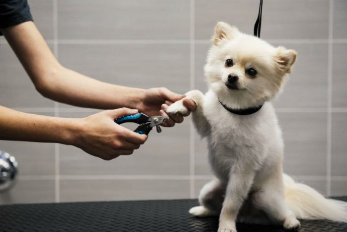 Small white dog getting its nails trimmed at Dogtopia of Harbor Steps Spa.